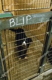 DOG BELONGING MURDERER DENNIS NILSEN ...
