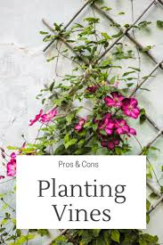 Pros And Cons Of Planting Vines In The Garden Gardening Know How S Blog