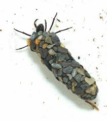 Northern Case Maker caddisfly | Caddis flies, Fly fishing, Insects