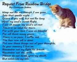 message from the rainbow bridge