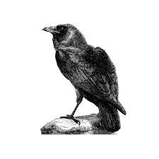 Raven Wall Decal Pen And Ink Style By Inkwood Impressions On