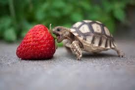 cute turtle wallpapers top free cute
