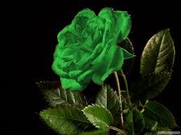 صور ورد اخضر