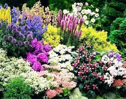 small flower garden lifelinkz info