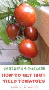 7 things to put on tomato planting hole