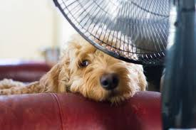 How to Keep Your Dogs Cool in the Heat
