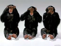 صور القرود اجمل صور القرود صور قرود مضحكة خلفيات للشمبانزي روعه
