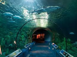 7 best aquariums in texas family