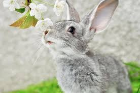 pretty rabbit wallpaper nature and