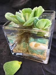 tabletop water garden arrangement cute