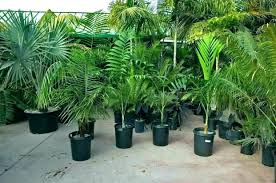 8 best fertilizer for palm trees