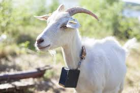 Europe S First Virtual Goat Fence Is On The Market