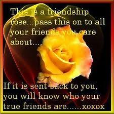 this is a friendship rose flowers quote com