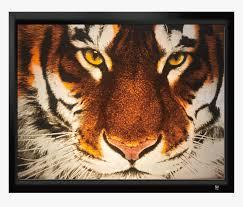 tiger hd pics hd png