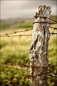 Barbed Wire Post Country Photography Country Fences Farm Photography