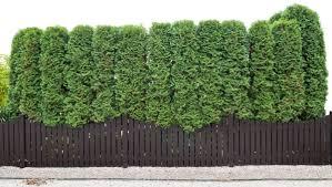 Plant A Wind Break And Regain Your Sanity The Esperance Express Esperance Wa