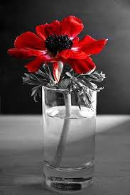 Pin by Therese West on festés   Color splash red, Color splash, Color  splash photography