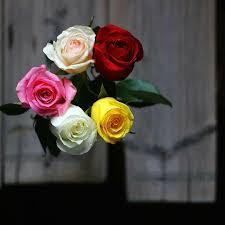 صور ورد طبيعي اشكال الورد الطبيعي بالصور رمزيات