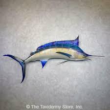 fish blue marlin mount
