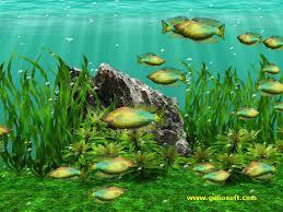 49 moving fish tank wallpaper on
