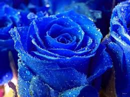 اجمل ورد ازرق ورود زرقاء رائعة ابداع افكار