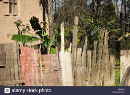 Fence Palm Tree Leaf In High Resolution Stock Photography And Images Alamy