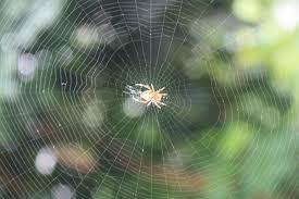 Spider web - Wikipedia