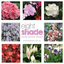8 summer flowers for shady gardens