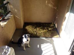 My Dog S New Patio Porch Potty We Bought Two 24x48 Dog Crate Pans From Petsmart And Lined Them With Kitty Litter We Porch Potty Dog Potty Balcony For Dogs
