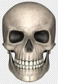 جمجمة عظم أمامي جمجمة مضحكة Png