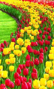 flowers garden wallpapers hd for