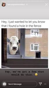 Pin By April Herbst On Cow Memes Fence Knowing You Let It Be