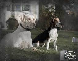 Sportdog Brand In Ground Fence System Brand Sportdog Ground System Ad Dog Fence Dogs Sporting Dogs