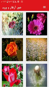 صور ازهار وورود For Android Apk Download