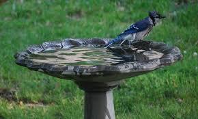 10 Best Bird Bath Models For Your Garden Epic Gardening