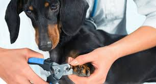 how often should you cut your dog s