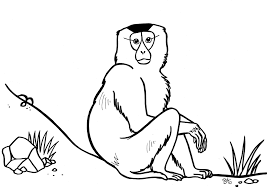Coloring Pages Animals Of Cambodia Brenda De Groot