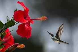 صور منوع جميلة اجمل صور متنوعه في العالم كلام حب