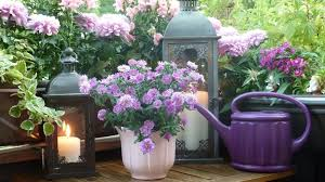 flower plants the best options for