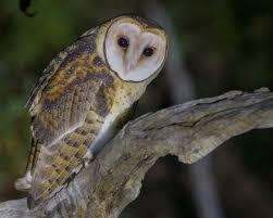 get twitching bird watchers your
