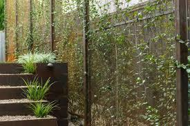 Custom Steel Privacy Screens Planted With Star Jasmine Vines Modern Garden Austin By Eden Garden Design