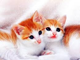cute cats and kittens wallpapers top