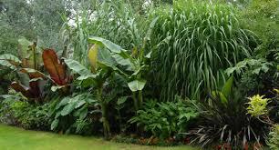 tropical garden plants 05434 tropical
