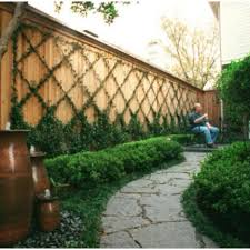 Jasmine Vines Trellis I Still Want To Do This On Our Wall Maybe Larger Garden Tips And Tricks Backyard Fences Vertical Garden Backyard