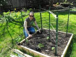 raised bed trellis for cubers bing