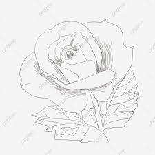 رسم خط الوردة الوردة الإبداعية وردة مرسومة باليد وردة