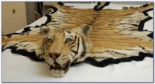 real tiger rug rugs home design
