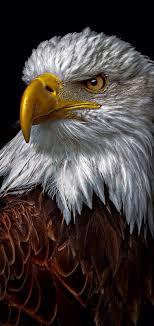 اجمل صور نسور و صقور في عالم النسر Eagle 2020