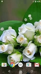 الورود البيضاء خلفيات حية Hd For Android Apk Download