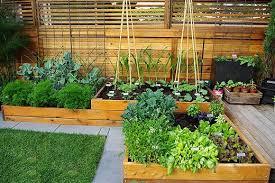 turn your backyard into an urban veggie